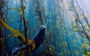 best-underwater-photos-2013-seal_68183_600x450-555x348
